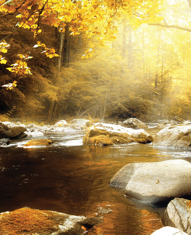 forest listen gold